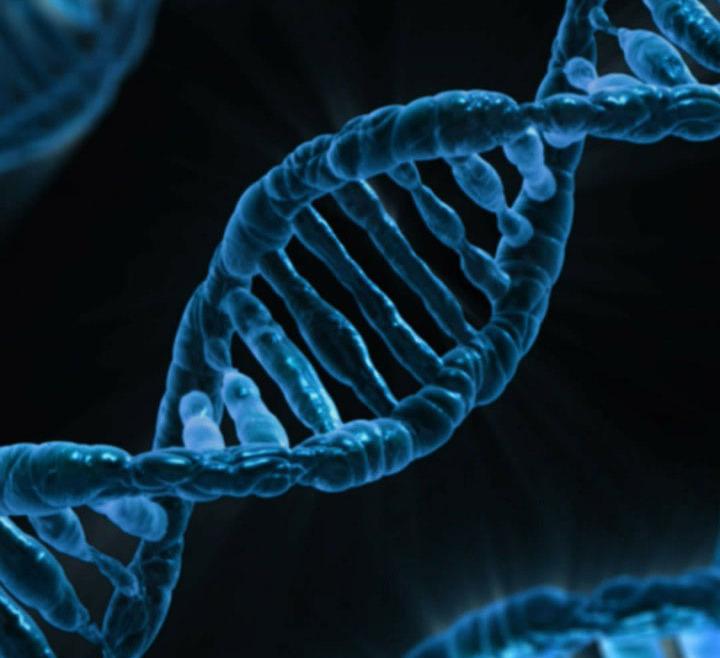TESTY GENETYCZNE
